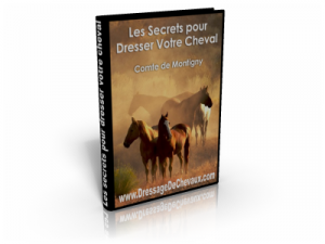 comment dresser son cheval